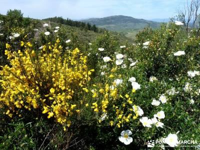 Carcavas de Alpedrete de la Sierra y Meandros del Lozoya;trekking y aventura;pedraza velas